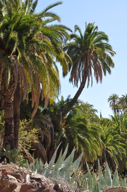 Wandelreis Spanje Gran Canaria
