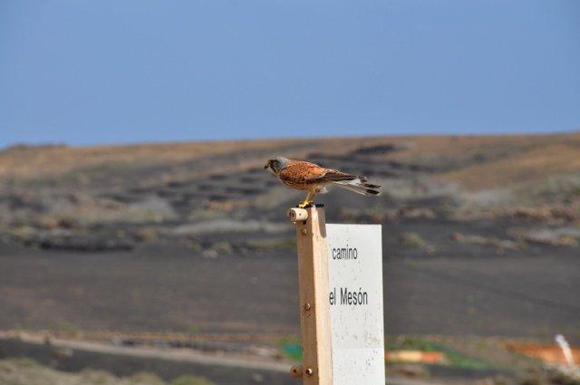 Wandelreis Spanje Lanzarote en La Graciosa