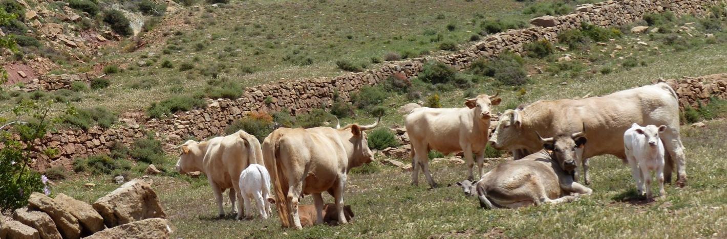 Wandelreis Aragon